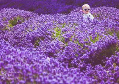English lavender fields