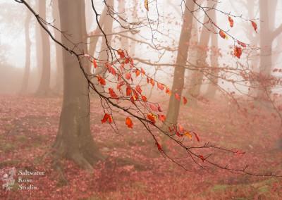 Yorkshire fog