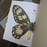 Saltwater Rose Studio Observers Notebooks Butterflies inside view 1