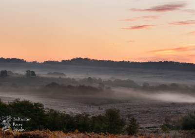New Forest dawn